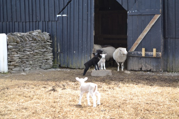 Obviously, the little lambs were the highlight of our visit.