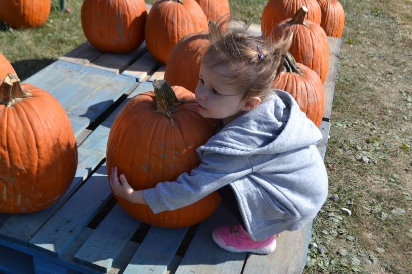 Pumpkin hugger.