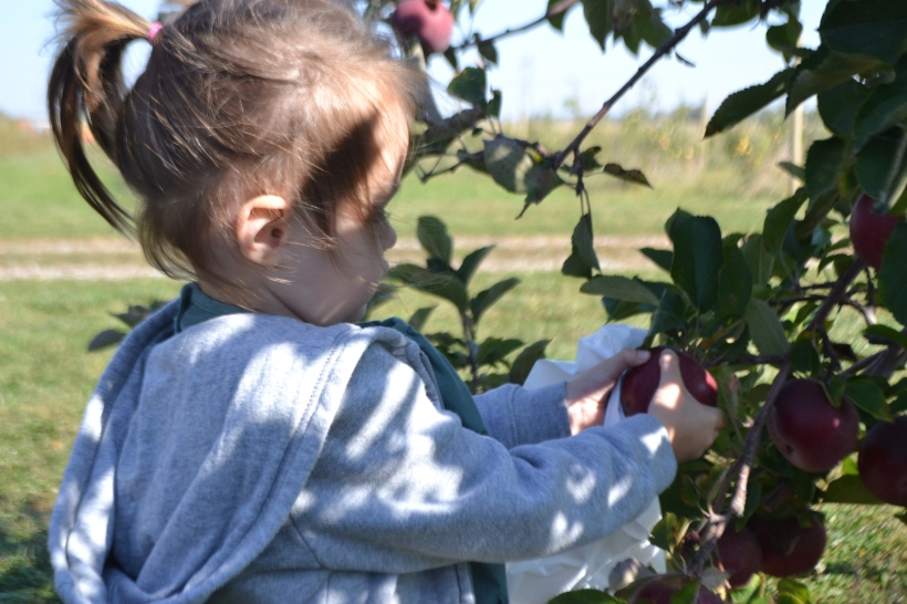 She quickly became an apple picking pro.